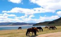 Tsetserleg mongolie