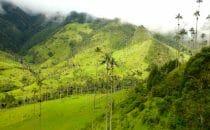 Vizeo blog voyage Vallee de Cocora Colombie