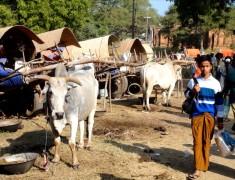 campement des artisans festival de bagan birmanie