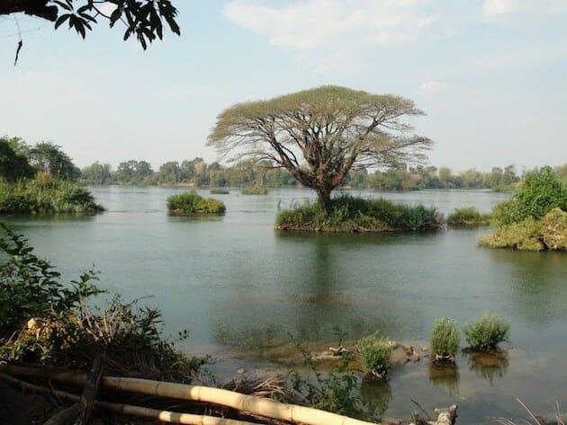 arbre 4000 iles Laos