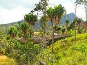 village papou vallée du Baliem Papouasie