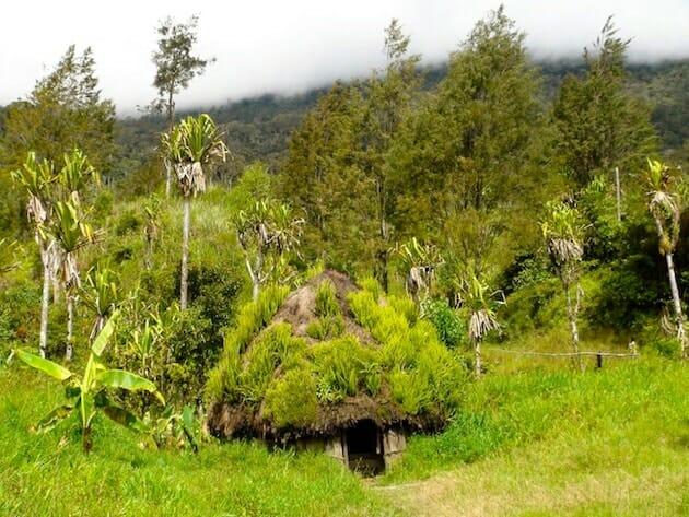 Hutte papou vallée du Baliem Papouasie