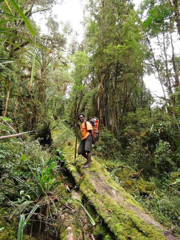 Yesaya sur un tronc vallée du Baliem Papouasie