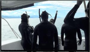 capitaine excursion dauphins Kaikoura Nouvelle Zélande