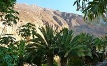 oasis canyon de colca pérou