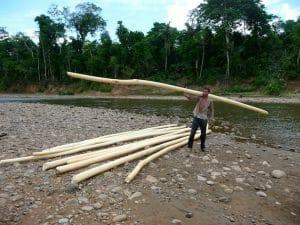 rondins de bois pour raft parc national de Madidi Bolivie