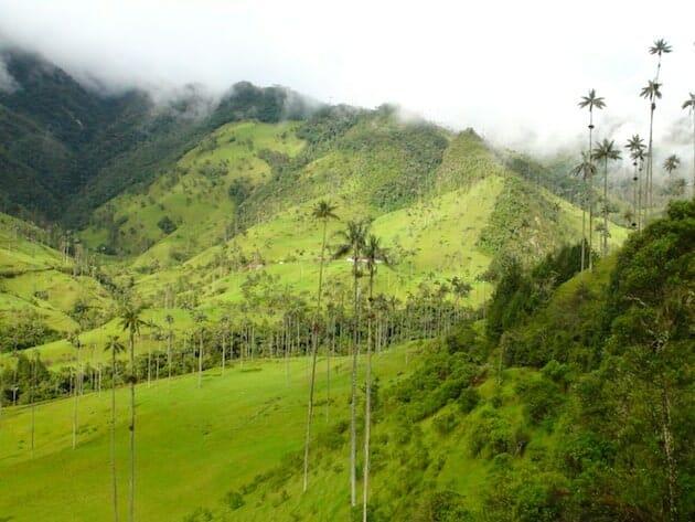 vallée de cocora salento colombie