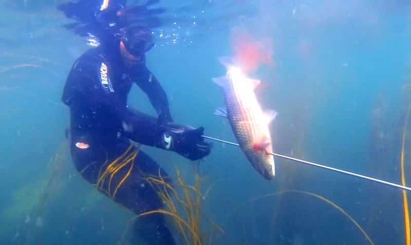 La pêche russe 3 7 où et sur quoi attraper un grand poisson