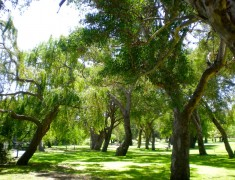 yanchep national parc roadtrip australie