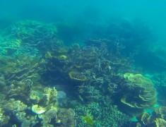 fonds marins coral bay australie