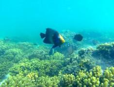 poisson parc national cap range australie