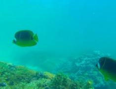 poissons coral bay australie