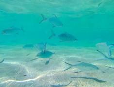 poissons exmouth cap range