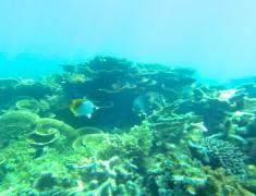 road trip mouches shark bay australie