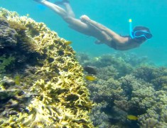 snorkeling exmouth australie