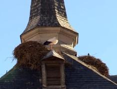 nid de cigogne alcala de henares