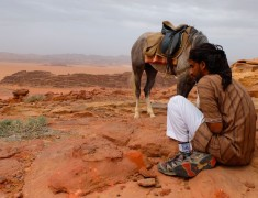 bedouin cheval wadi rum