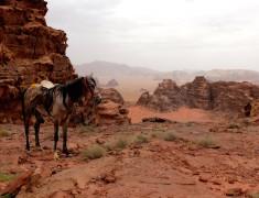 cheval jordanie wadi rum mont