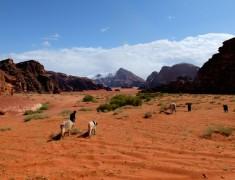 wadi rum jordanie desert