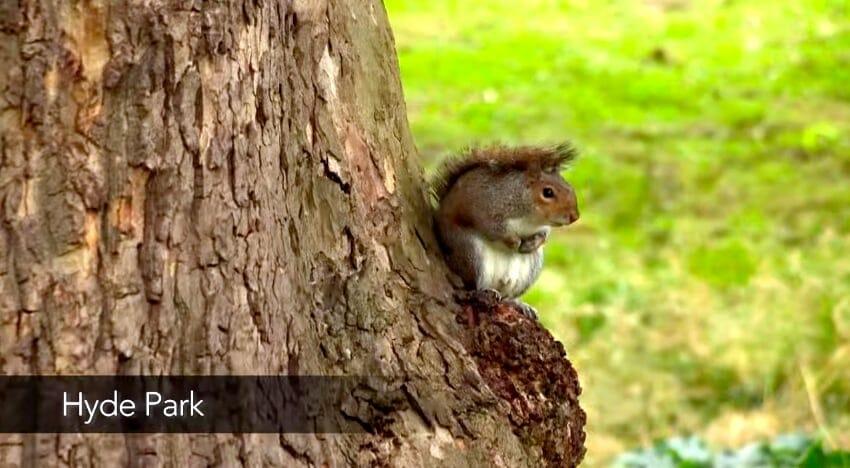 ecureuil hyde park