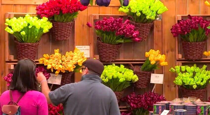 marche aux fleurs amsterdam