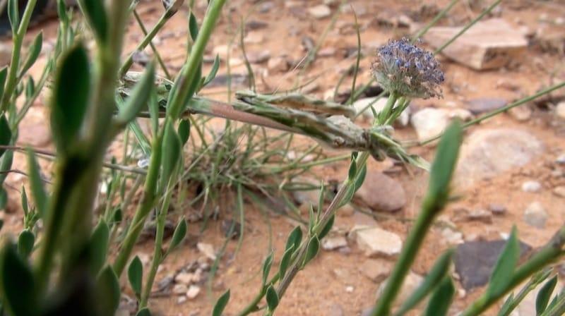 mante religieuse parc national de dana jordanie
