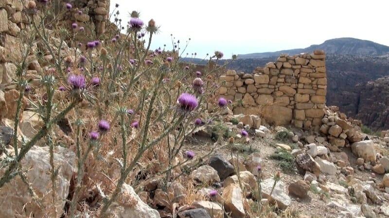 village de dana jordanie