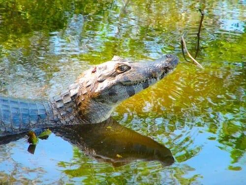 tourisme solidaire pantanal brésil
