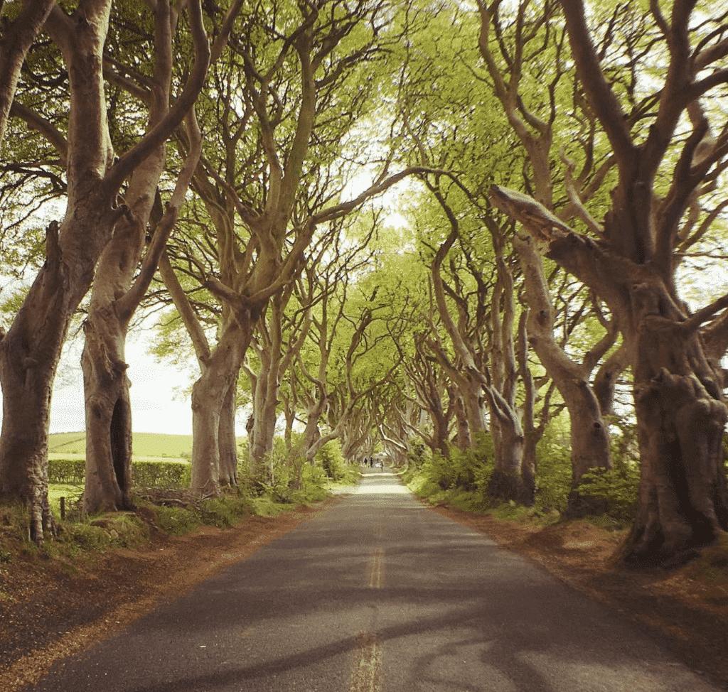 route arbre irlande du nord