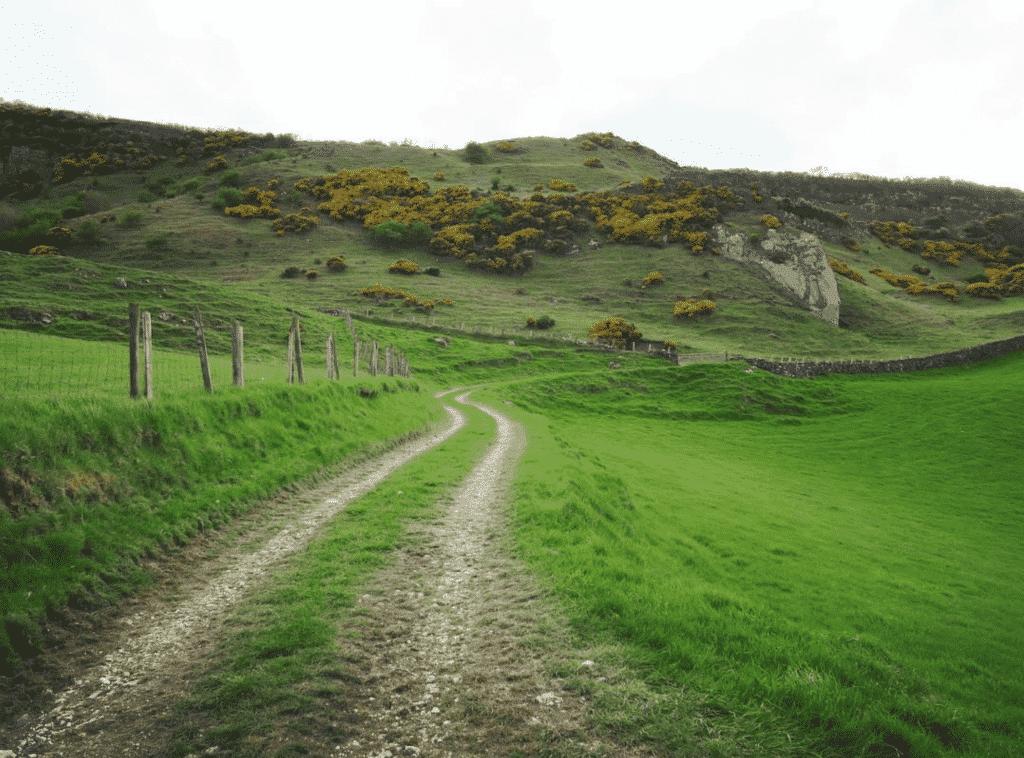 les vertes prairies irlande du nord