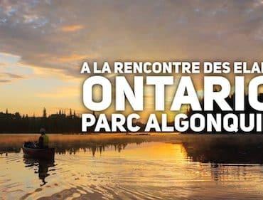 voir-elans-canoe-parc-algonquin-ontario