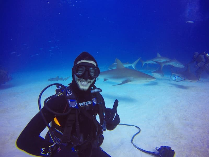 plongee requin grand bahamas