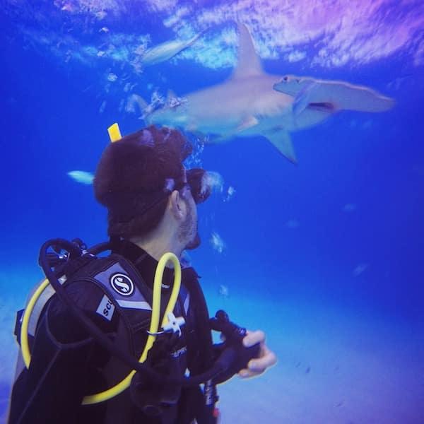 Plongee requin marteau Bimini Osland