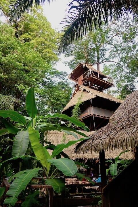 camp canopée guyane