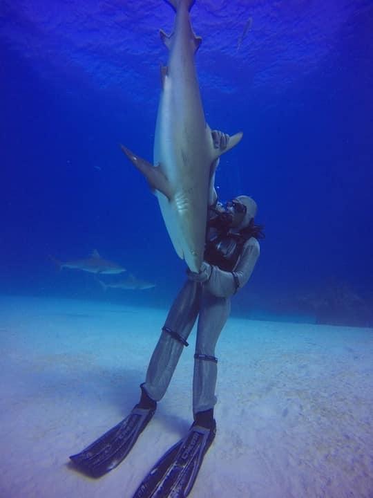 requin bahamas
