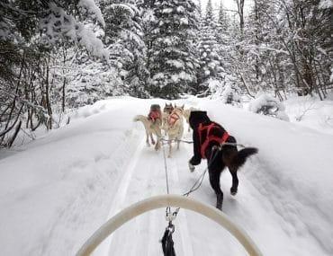 quebec en hiver chiens de traineau parc jacques cartier