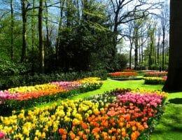 parc keukenhof amsterdam tulipe
