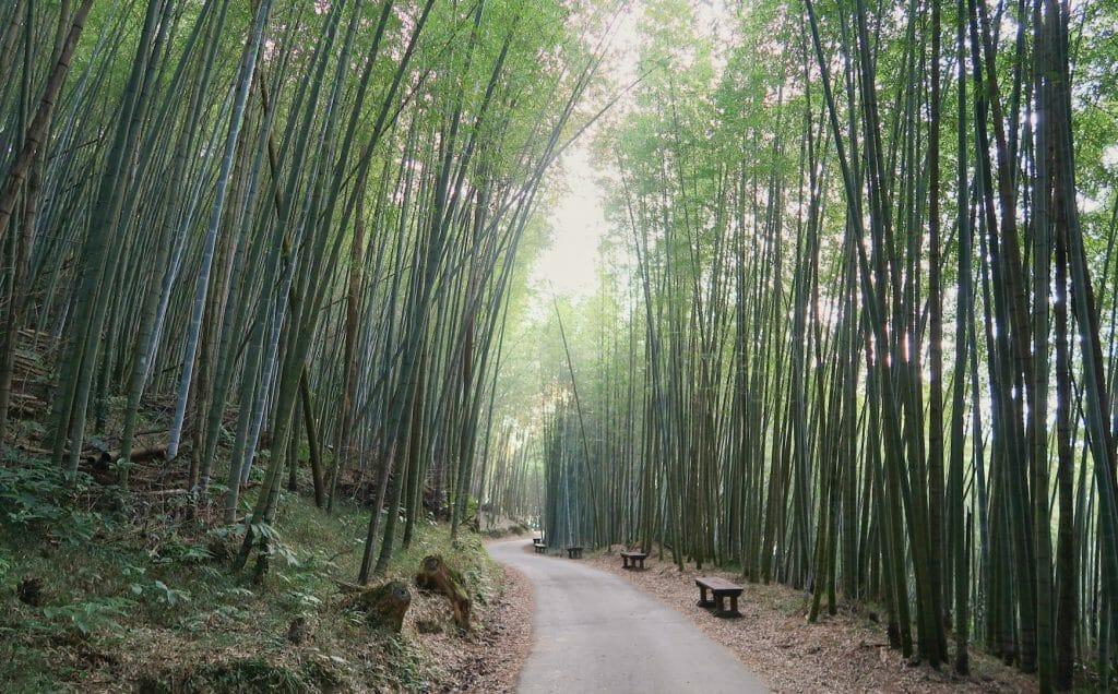 tunnel de bamboo ruifeng taiwan