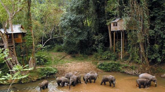 Yunnan elephant reserve naturelle de Xishuangbanna chine