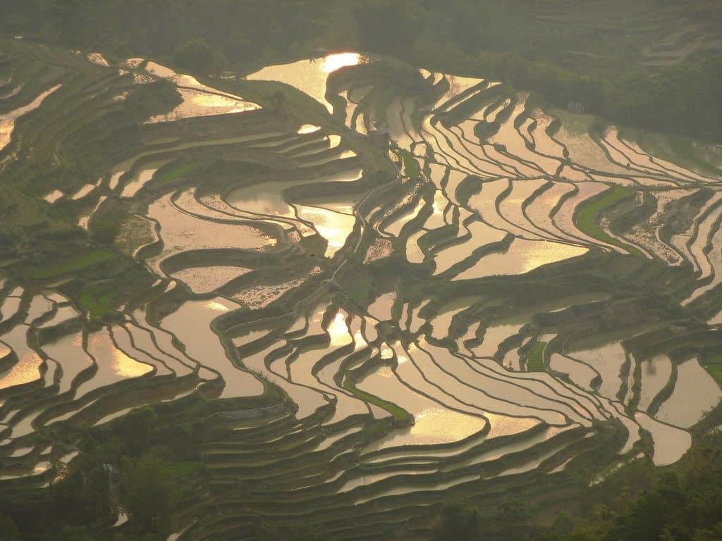 Les superbes rizières qui subliment les paysages