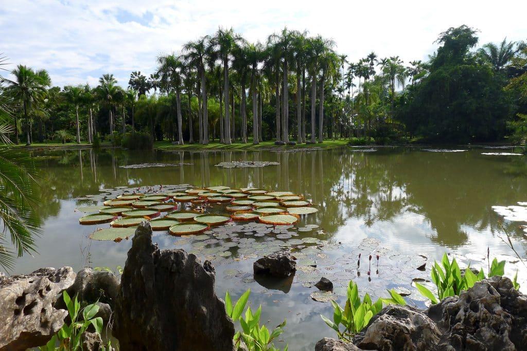 La région tropicale avec ses forets de bambou et nénuphars