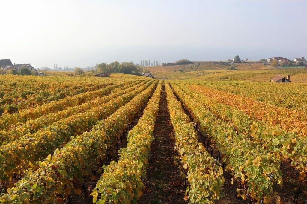 voyage en suisse vignes de lutry