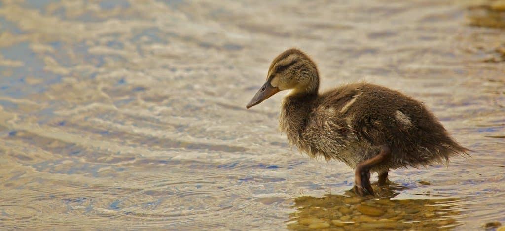 visiter bratislava lac zlate sport nautiques