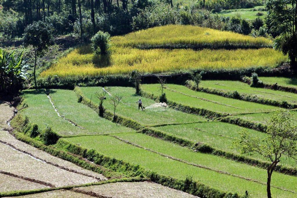 visiter myanmar trek kalaw plantations