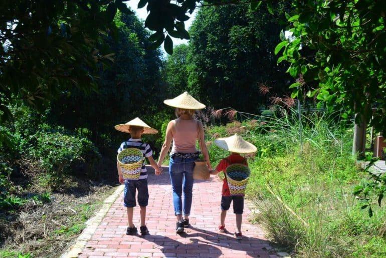champs de thé voyage en famille