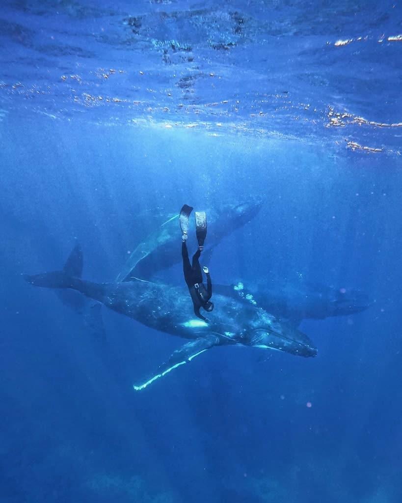 nager baleine rurutu
