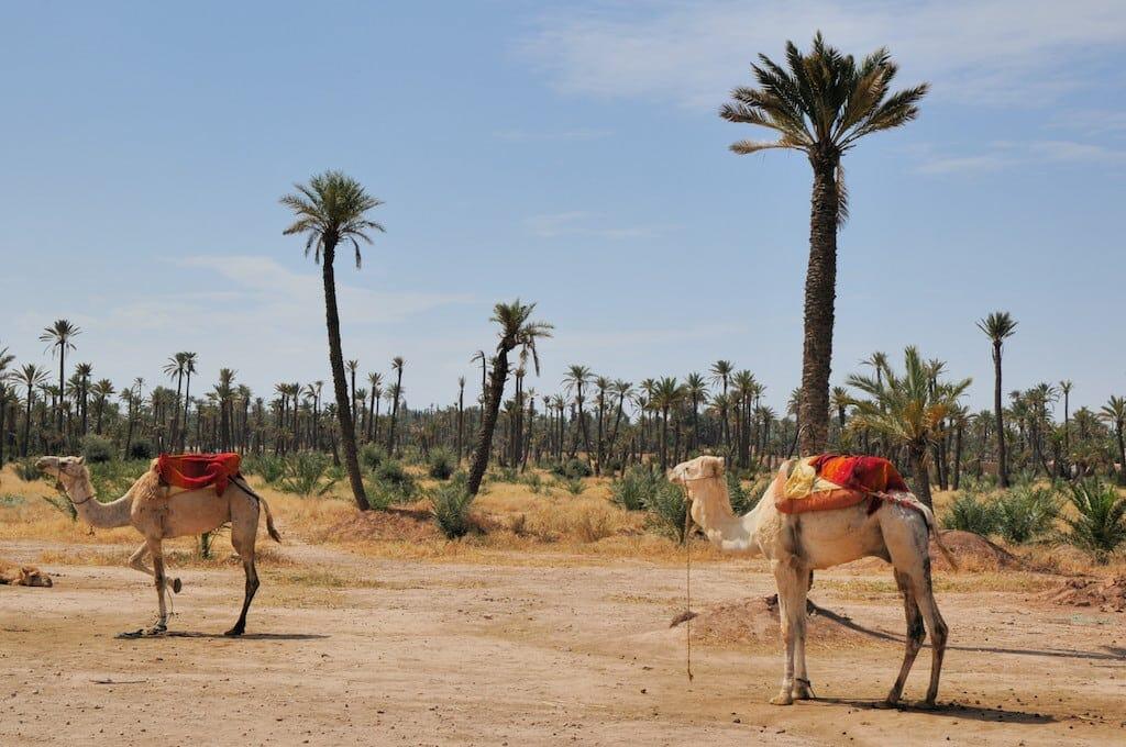 palmaraie marrakech, place jemaa el fna maroc, Visit Marrakech, Visit Marrakech in 4 days, the 17 activities not to be missed